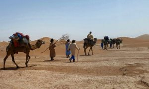Desert Tours from MHamid - Camel excursion caravan